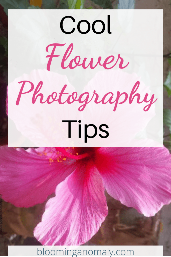 cool flower photography tips