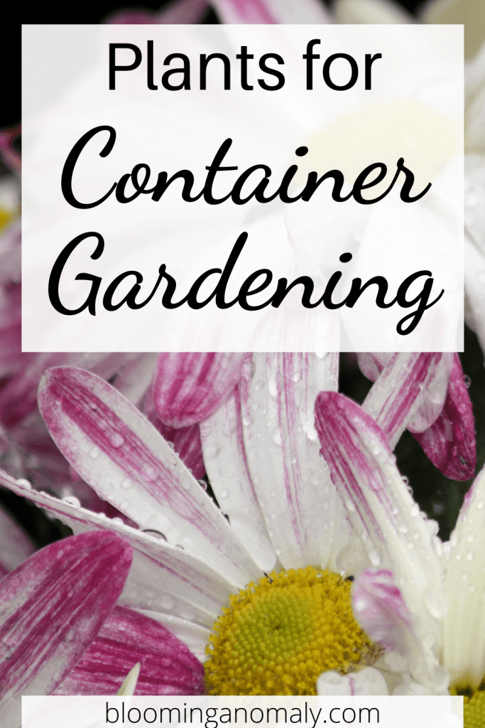 plants for container gardening