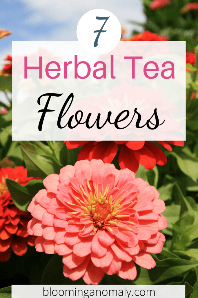 herbal tea flowers