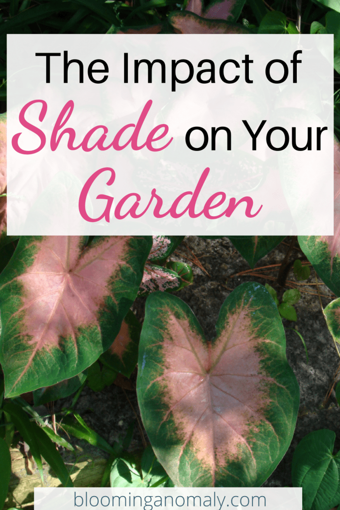impact of shade on your garden