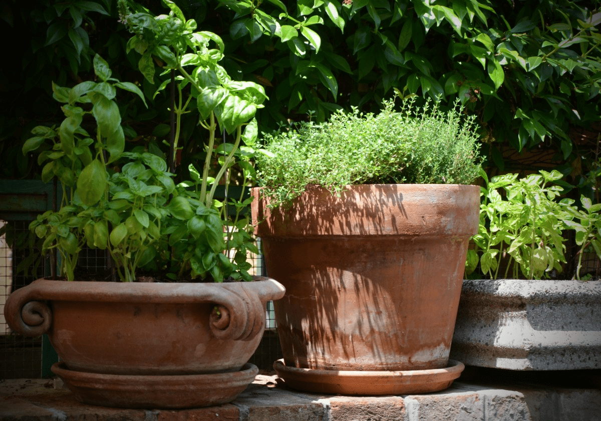 small kitchen garden