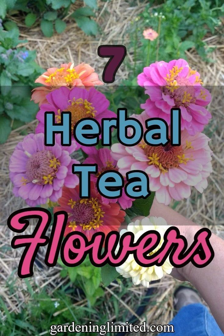 herbal tea flowers