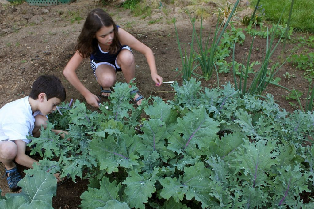 grow a vegetable garden with kids