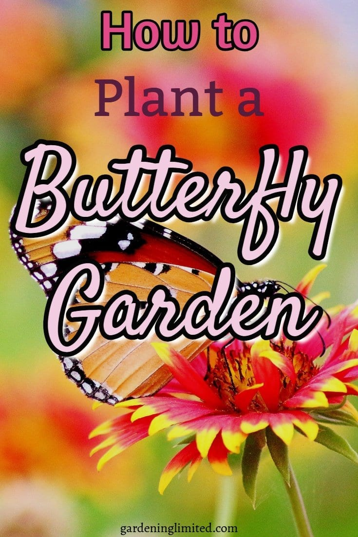 how to plant a butterfly garden, butterfly garden