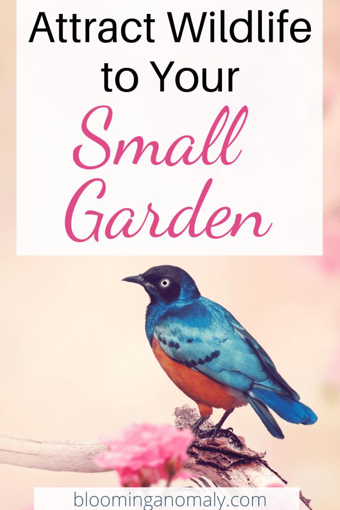 wildlife in your small garden