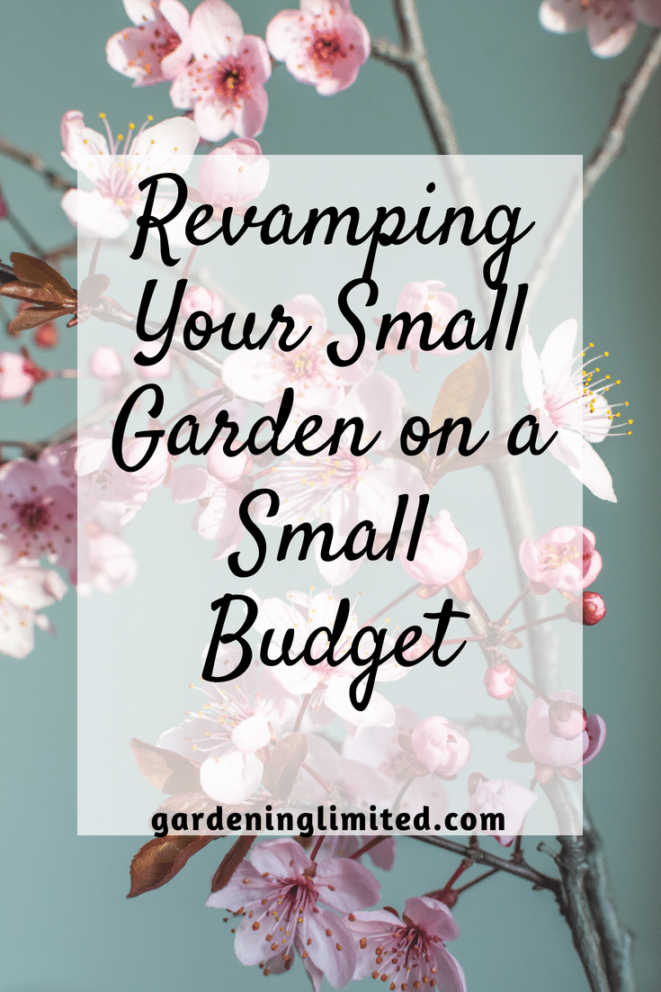 Revamping Your Small Garden On A Small Budget, small garden on a small budget, small garden, flowers, pink flowers