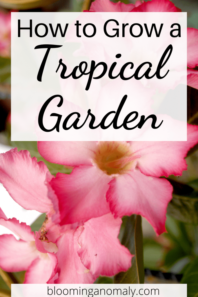 grow a tropical garden