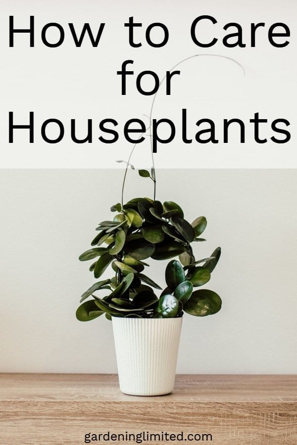 how to care for houseplants, houseplants