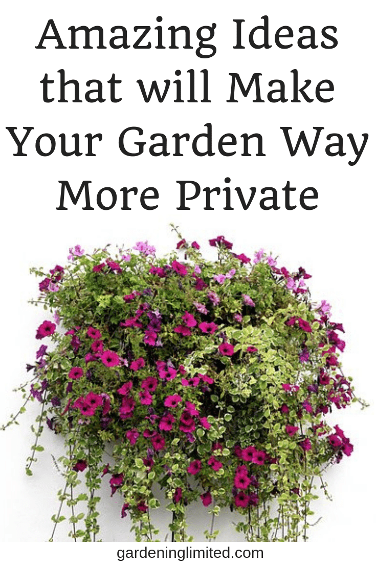 Amazing Ideas that will Make your Garden Way More Private