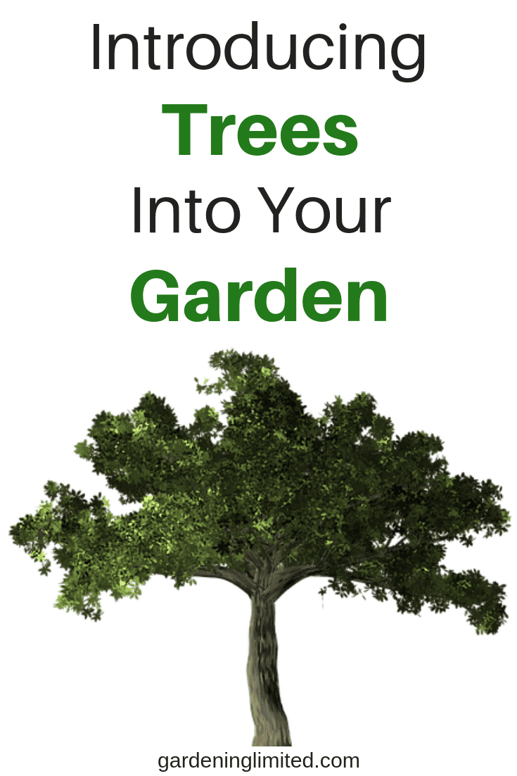 introducing trees into your garden, trees, garden