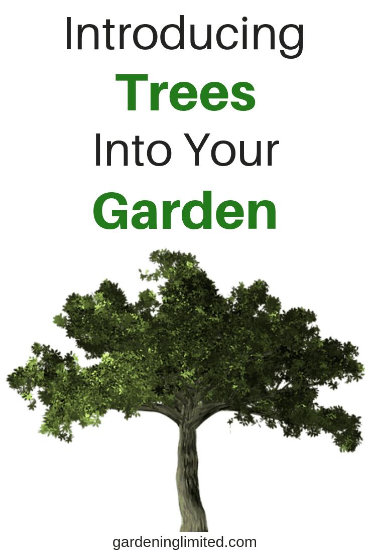 introducing trees into your garden, trees, garden