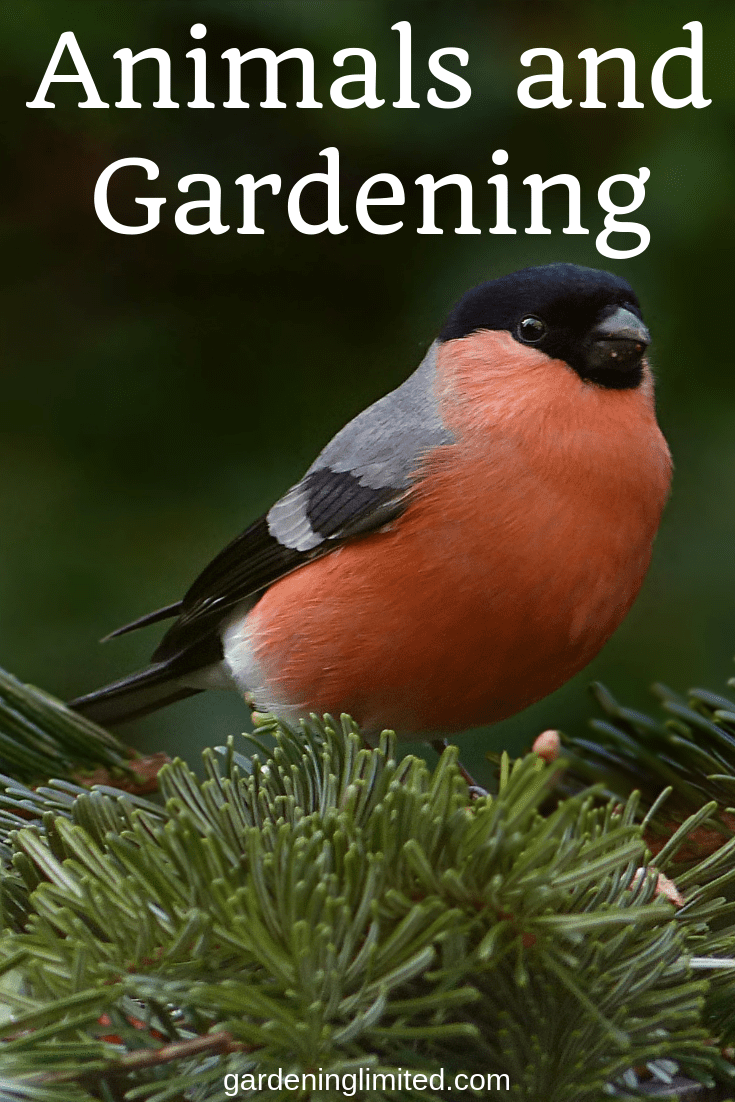 animals and gardening