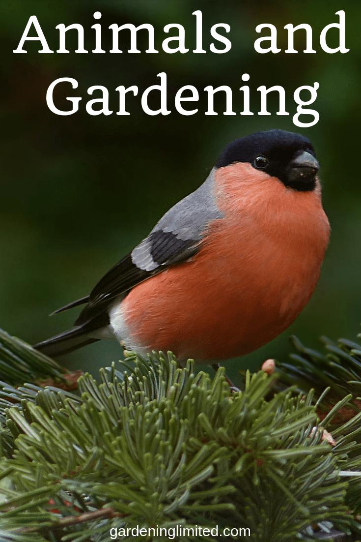 animals and gardening