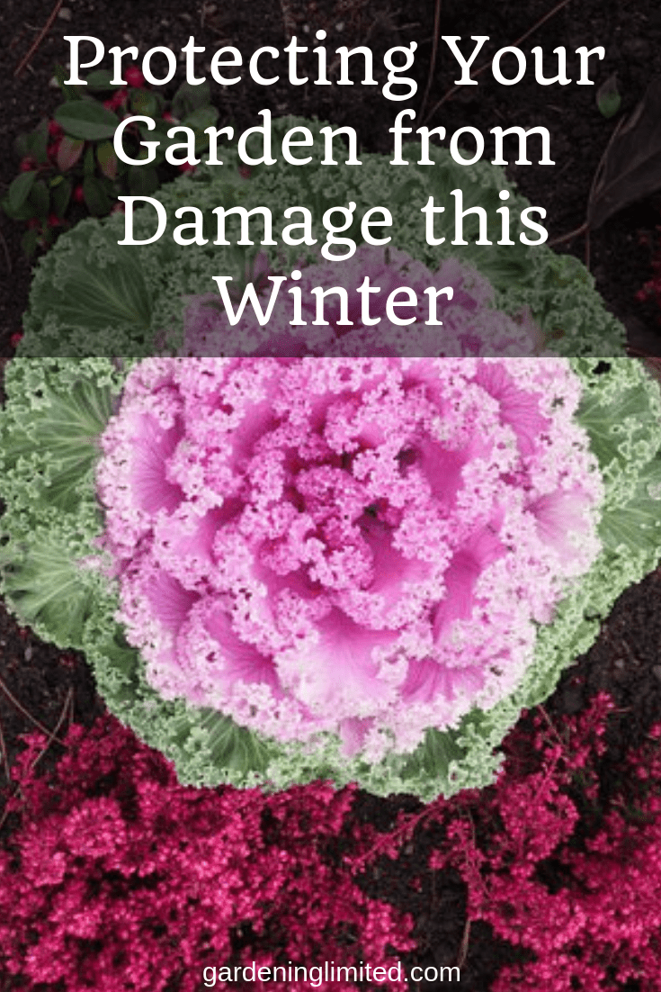 protecting your garden from damage this winter