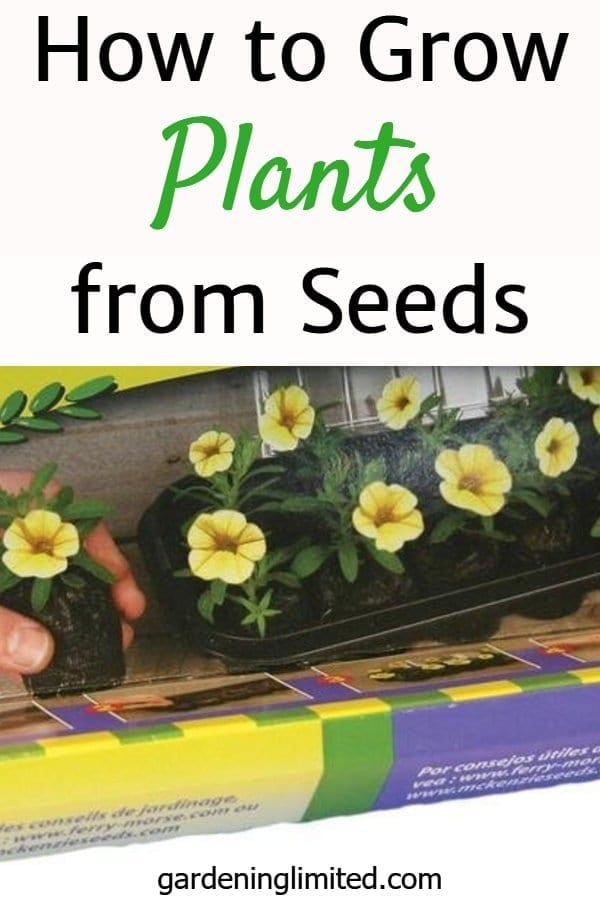 how to grow plants from seeds, greenhouse