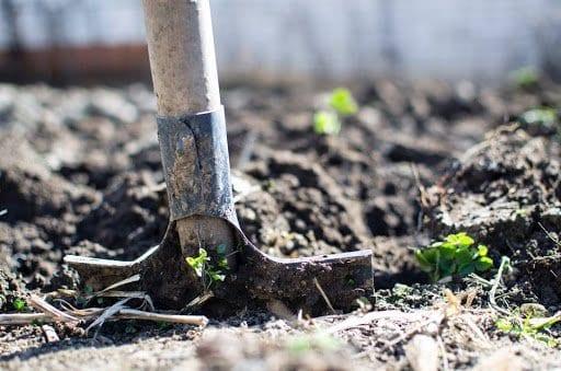 Common Hurdles To A Better Garden