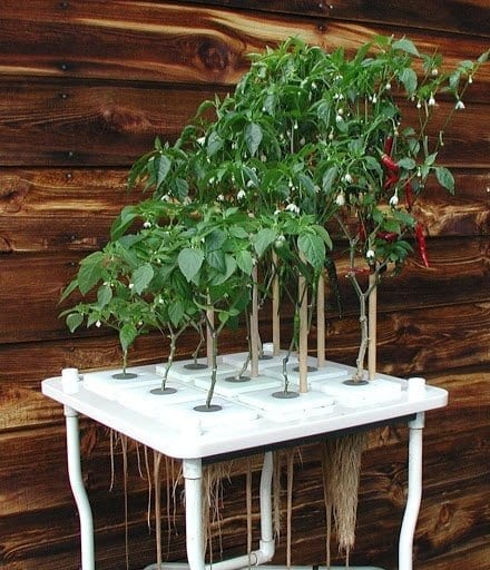 Canadian Wholesale Hydroponics Encourage You to Grow Your Own Plants