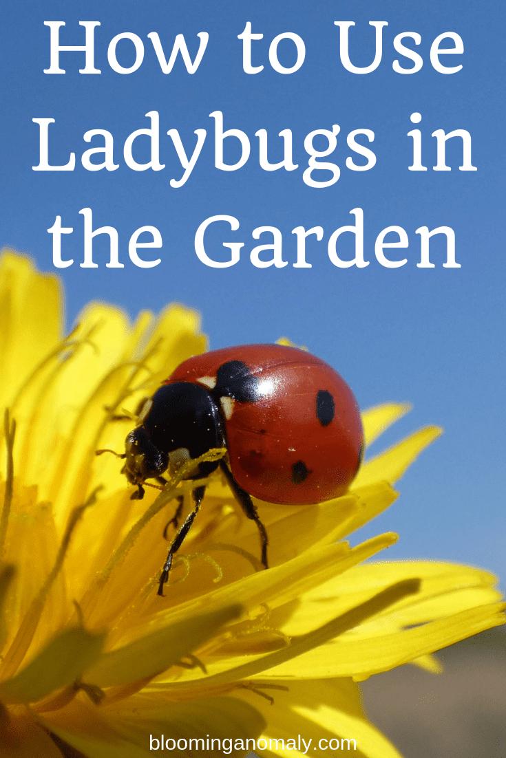 how to use ladybugs in the garden, ladybugs
