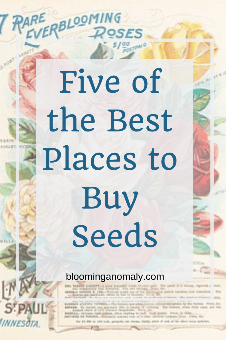 Five of the Best Places to Buy Seeds, burpee seeds, vegetable seeds, flower seeds, heirloom seeds