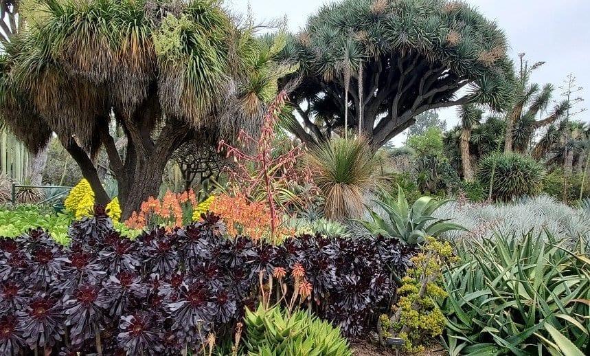 huntington botanical gardens, the huntington botanical gardens, the huntington, the huntington library, flowers, plants, desert garden