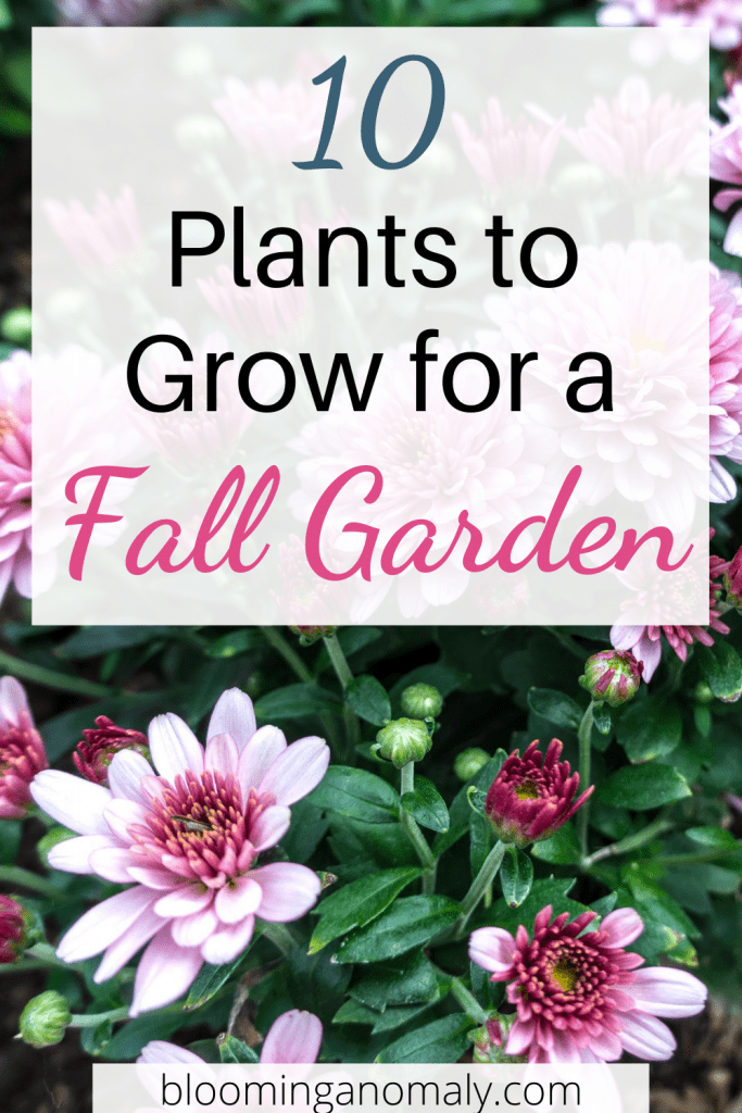 10 plants to grow for a fall garden (1)