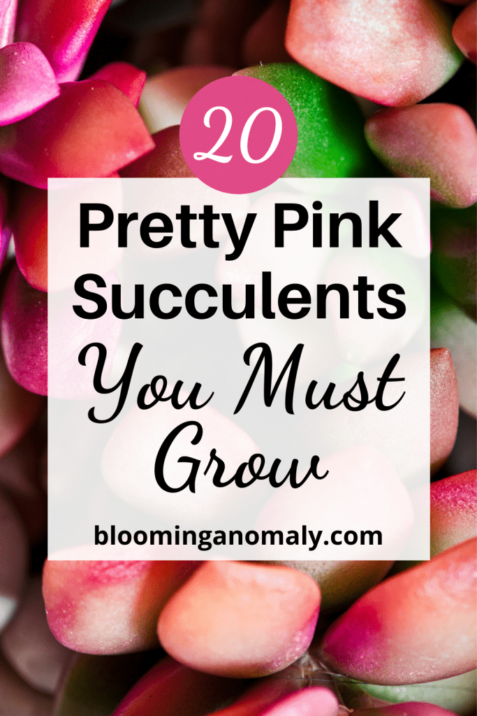Pretty Pink Succulents