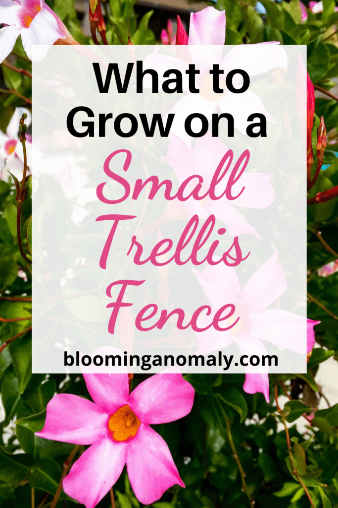 small trellis fence