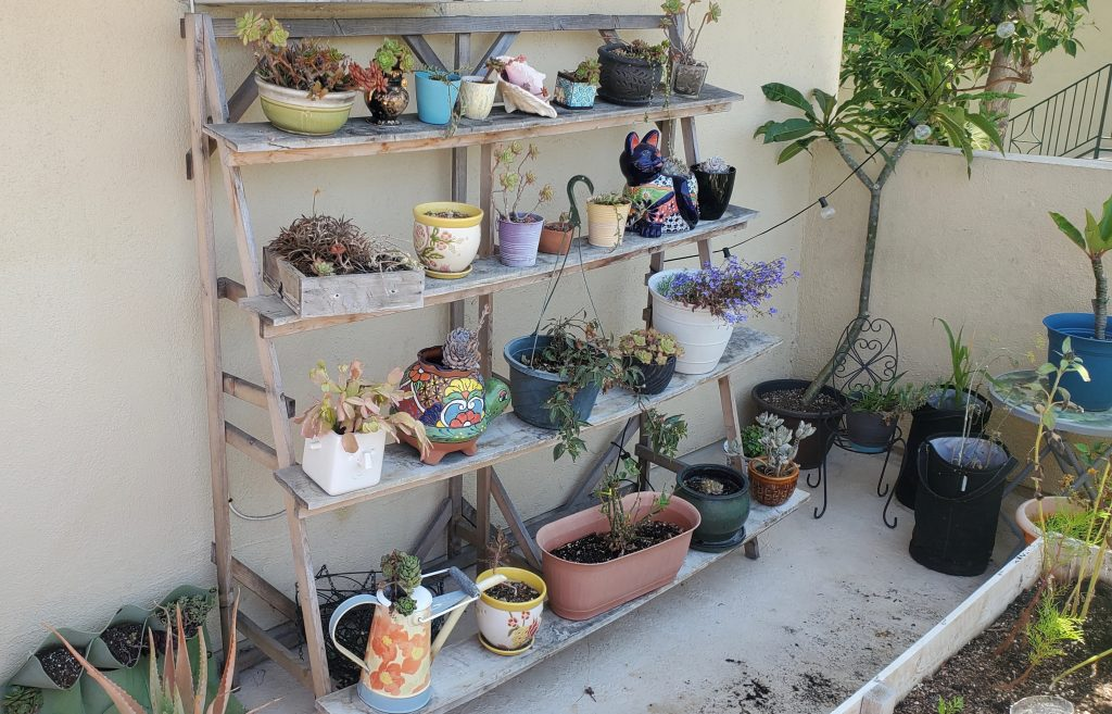my_succulents