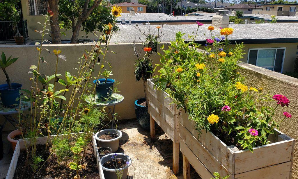 my_sunflowers_and_zinnias