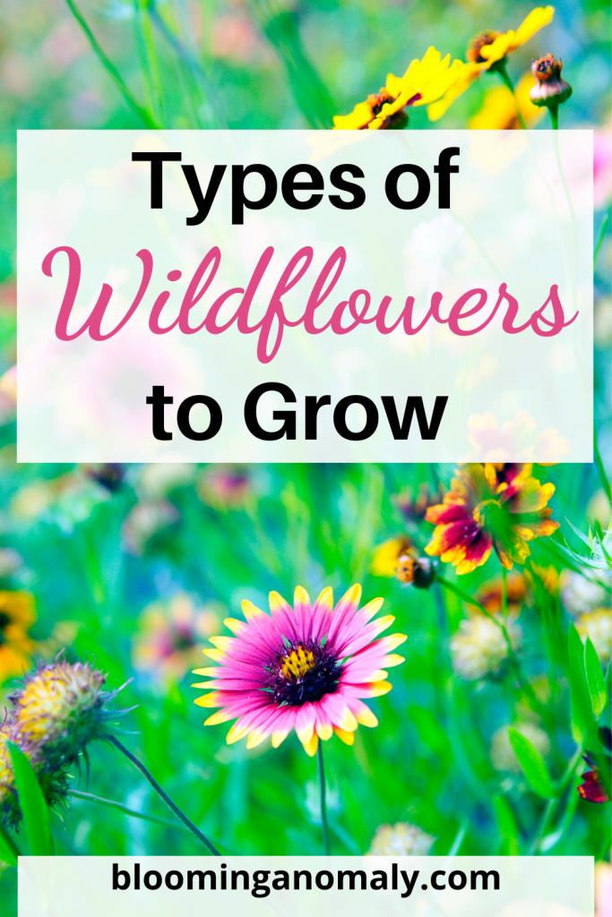 types_of_wildflowers