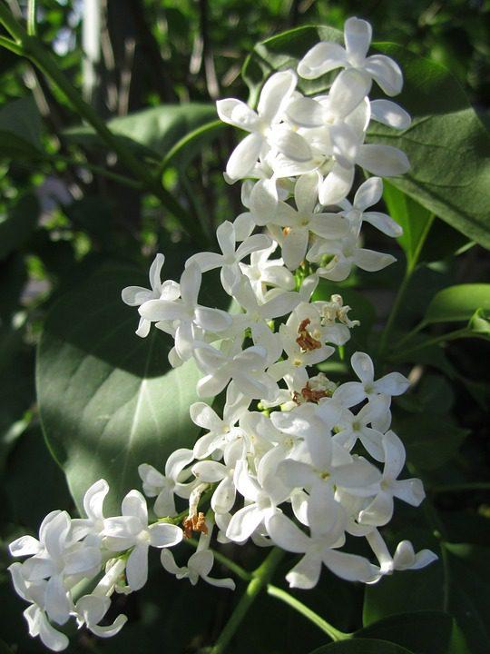 common_jasmine