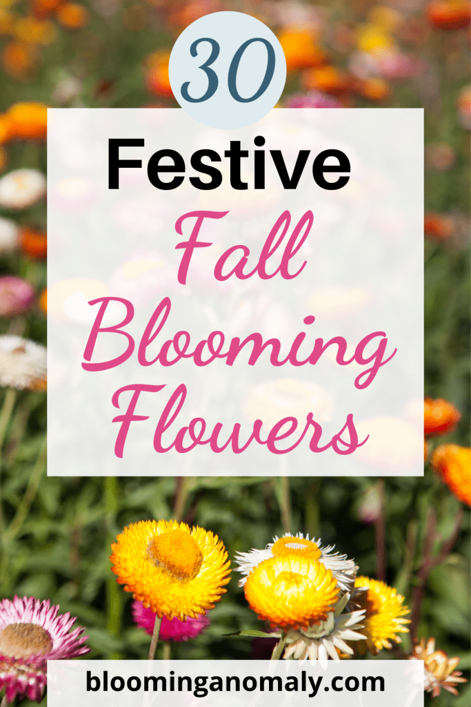 fall-blooming-flowers