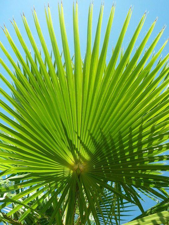 small_palm_tree