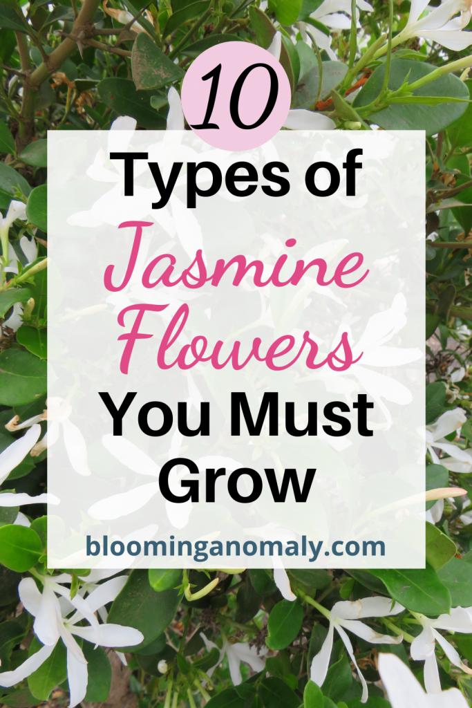 types_of_jasmine_flowers